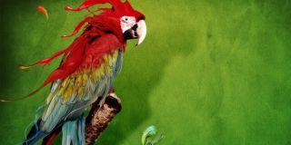 Kuşlarda Tüy Dökülmeleri